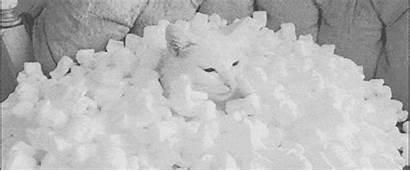 Styrofoam Polystyrene Foam Expanded Tedium Material