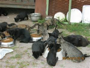 feral cat rescue nanny mcfur cats leash