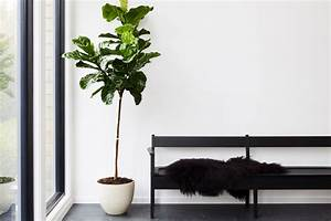 8, Best, Indoor, Plants, U0026, How, To, Take, Care, Of, Them