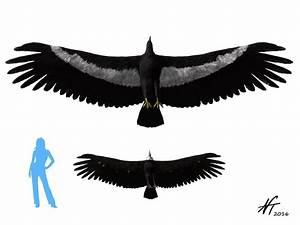 Argentavis - Facts and Pictures