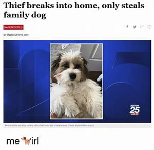 Thief Breaks Into Home Only Steals Family Dog NATION-WORLD ...
