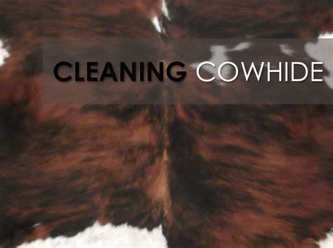 How Do You Clean A Cowhide Rug by Cowhide Rugs Cleaning Your Cowhide Rug