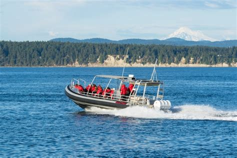 Whale Boat Tours Seattle by Whale Tours From Seattle To The San Juan Islands
