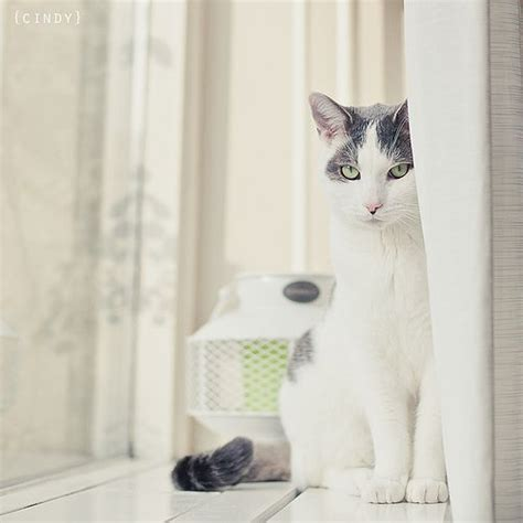 17 best images about cat at window on cats