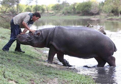 Pet Hippo Kills His Owner (9 Pics)