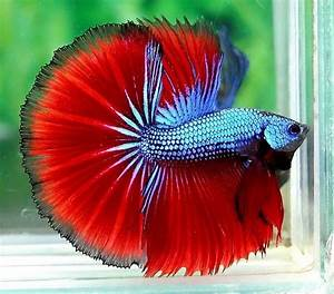 Why do I even let myself go to Petco anymore? : bettafish