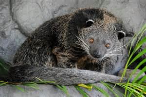 Most Unusual Animals in Australia