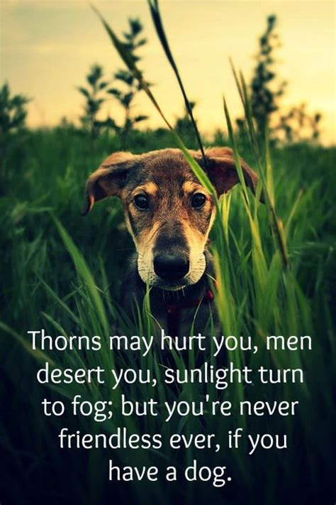 18 Heartwarming Dog Quotes About Life And Love  Sunlight. Teachers Day Quotes With Images. Nature Design Quotes. Confidence Definition Quotes. Christian Quotes By Celebrities. Instagram Quotes Missing You. Quotes On Change Kotter. Hurt Quotes Twitter Tagalog. Sad Quotes Family