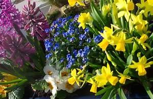 Garten Im März : garten checkliste m rz gartenarbeiten im fr hling ~ Lizthompson.info Haus und Dekorationen