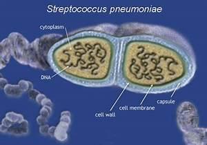 Structure - Pneumonia