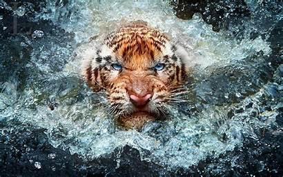 Desktop Wildlife Backgrounds Tiger Mobile