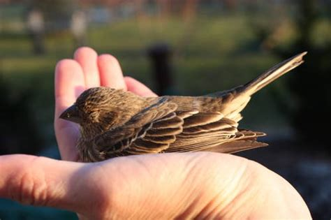 Image result for a picture of a bird in the hand