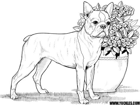 boxer coloring page yuckles dog breed coloring pages dog breed coloring pages gianfredanet