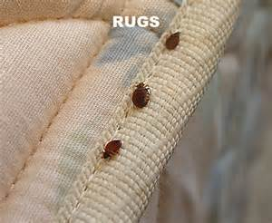 protecting your pet and rugs from flea infestation