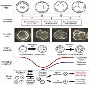 Summary Model Of Human Embryonic Aneuploidy Embryonic