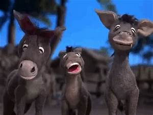 Laughing Donkey GIFs - Find & Share on GIPHY