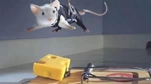 Produit Pour Tuer Les Souris : voici comment fabriquer un pi ge souris efficace sans les tuer ~ Melissatoandfro.com Idées de Décoration