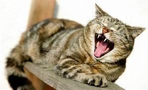 Katzen Fernhalten Von Möbeln : bilderstrecke zu mensch tier beziehung katzen binden sich nicht an den menschen bild 1 von 6 ~ Sanjose-hotels-ca.com Haus und Dekorationen