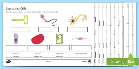 ks3 specialised cells worksheet activity sheets