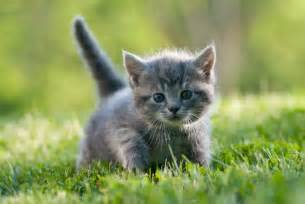 all about cats all about kittens petopedia