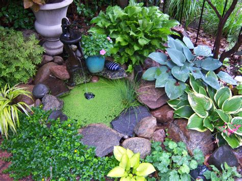 Water Gardening Is Something Anyone Can Do, Almost