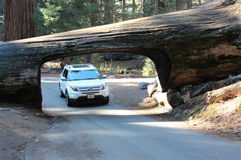 Parque Nacional De Los Secuoyas/sequoia National Park