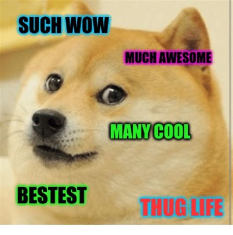 Much Wow Meme - such wow much awesome many cool bestest thug life life meme on sizzle