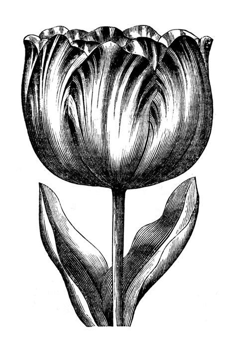 lip flowers clipart   cliparts  images