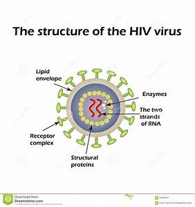 The Structure Of The Aids Virus  Hiv  Vector Illustration Stock Vector