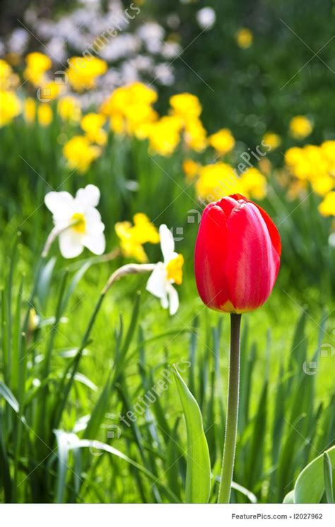 blooming spring flowers picture