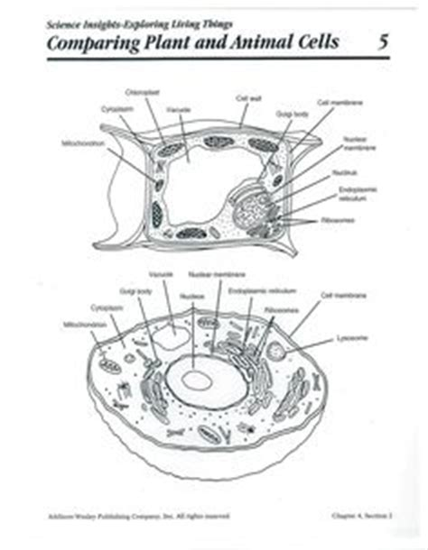 images  plant  animal cell  pinterest