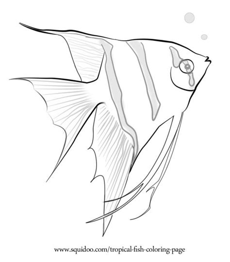 Tropical Fish Coloring Pages by Tropical Fish Coloring Page Fish