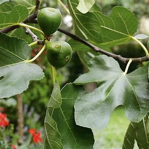 Große Winterharte Kübelpflanzen : frostempfindliche k belpflanzen einr umen das manufactum ~ Michelbontemps.com Haus und Dekorationen