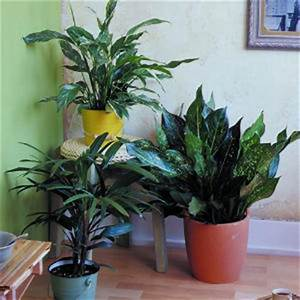 Easy-Care Houseplants | Houseplants, Low lights and Plants