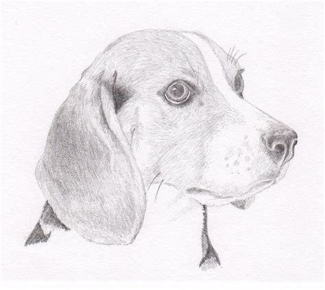 beagle signed personalized original pencil drawing double