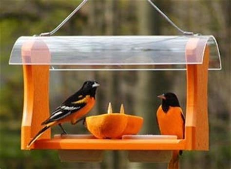 baltimore orioles feeders birds unlimited best place to hang oriole feeder