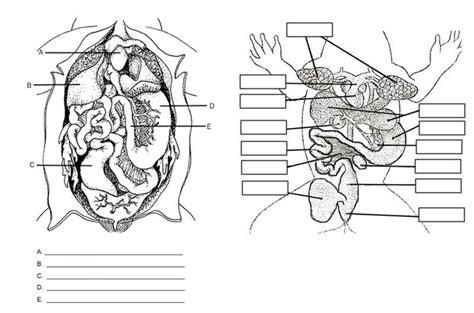 frog anatomy labeling worksheet hs science biology