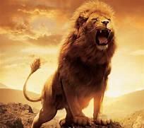 Lion Wallpaper HD Back...