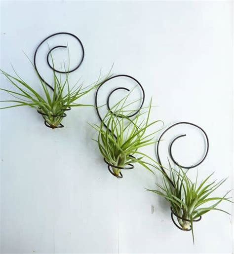 exceptionally beautiful air plant holder ideas  collect