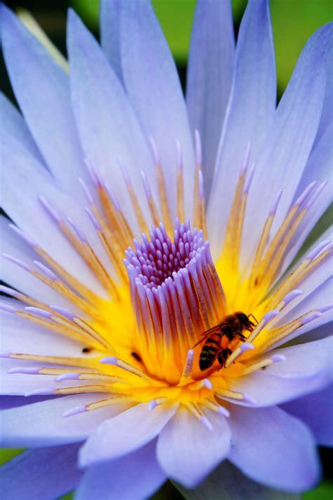 raymond huber honey bees