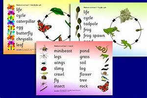 32 Best Images About Minibeasts On Pinterest