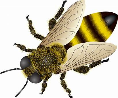 Bee Transparent Background Pngimg Pluspng Clipart Insects