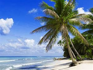 Bilder Von Palmen : fotos von meer natur palmen tropen k ste ~ Frokenaadalensverden.com Haus und Dekorationen
