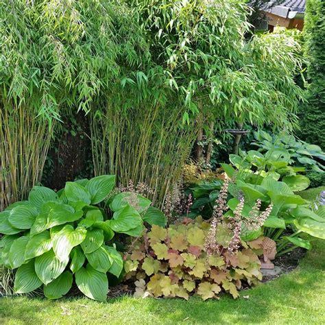Bambus Garten Pflanzen Kölle by Bambus Garten Bambus Garten Garten Pflanzen Und