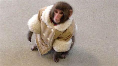 Ikea Monkey Owner Will Seek Custody
