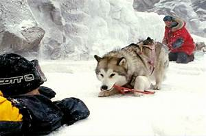 Eight Below Picture 3