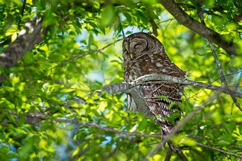 Stephen L Tabone Nature Photography