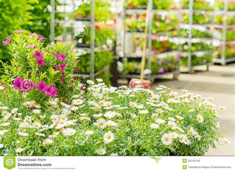 green house flower shop at garden centre stock photo