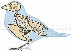 Bird Anatomy Drawing  Step By Step  Birds  Animals  Free