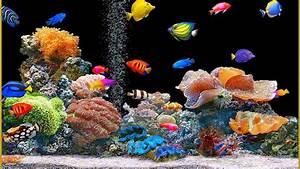 Animated Fish Tank Wallpaper | Wallpaper Animated